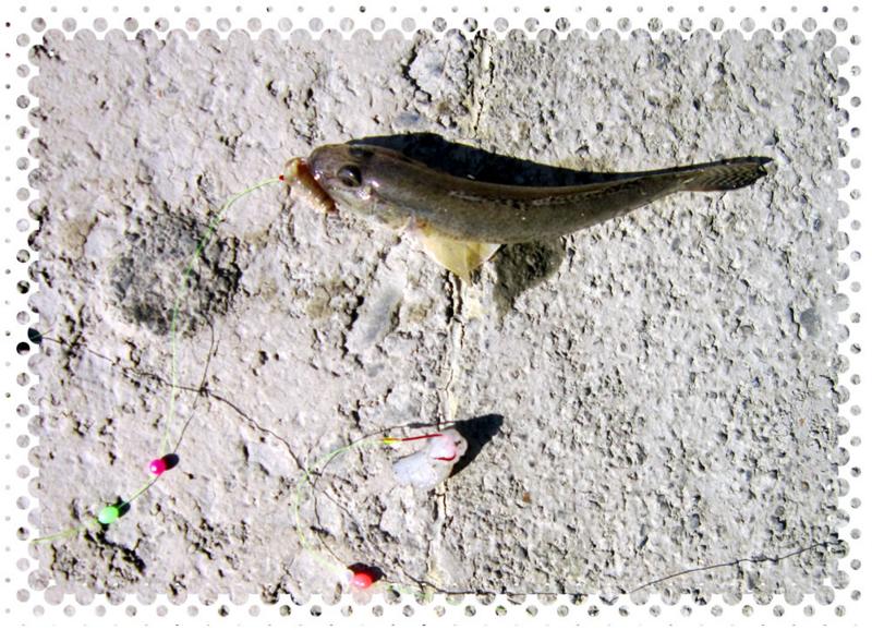f:id:familyfishing:20161011003148j:plain