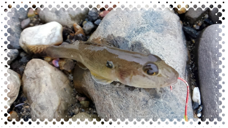 f:id:familyfishing:20161024201516j:plain