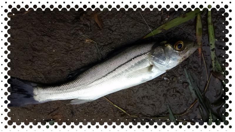 f:id:familyfishing:20161024201518j:plain