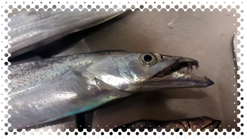 f:id:familyfishing:20161116002215j:plain