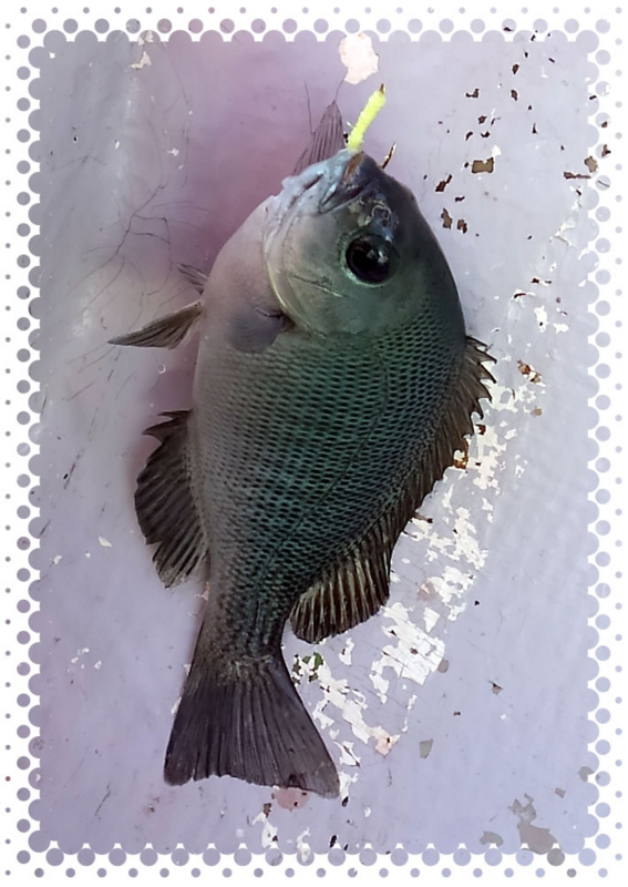 f:id:familyfishing:20161128201848j:plain