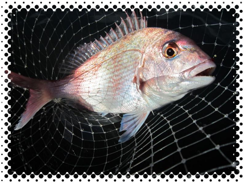 f:id:familyfishing:20161211231746j:plain