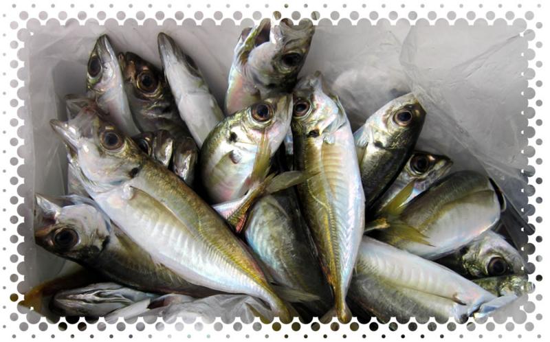 f:id:familyfishing:20161211231748j:plain
