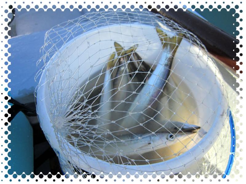 f:id:familyfishing:20170108224728j:plain