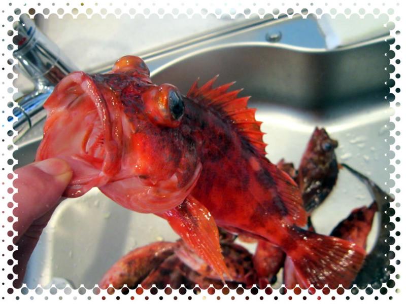 f:id:familyfishing:20170321202750j:plain