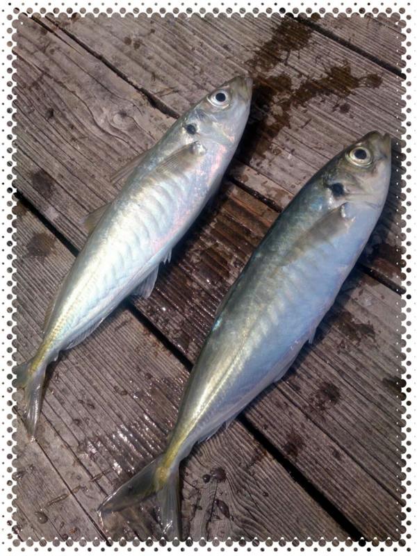 f:id:familyfishing:20170418062309j:plain