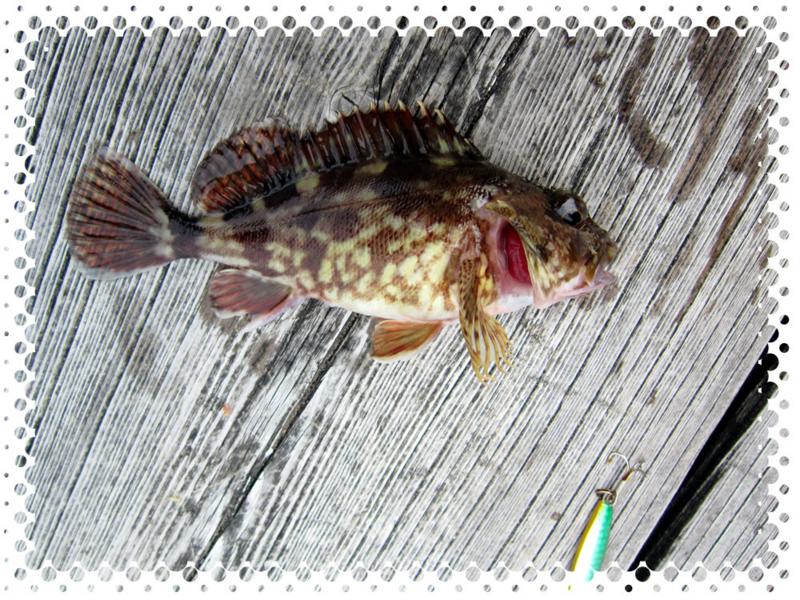 f:id:familyfishing:20170508213317j:plain