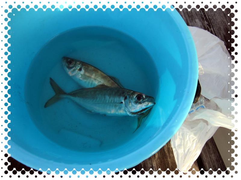f:id:familyfishing:20170508213319j:plain