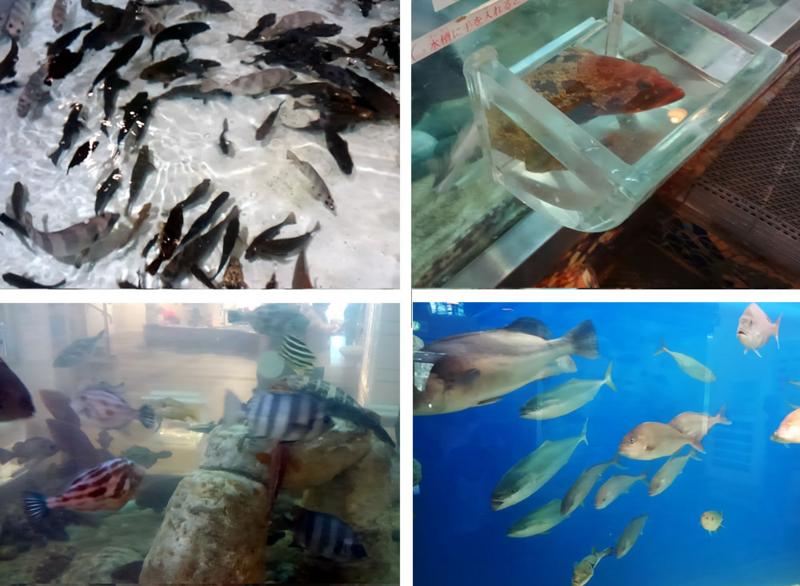 f:id:familyfishing:20170508220002j:plain