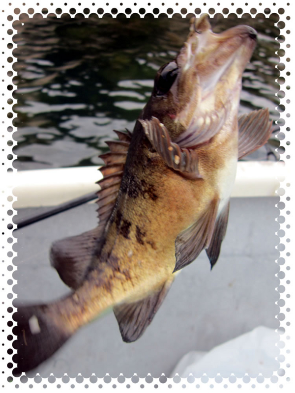 f:id:familyfishing:20170518230318j:plain