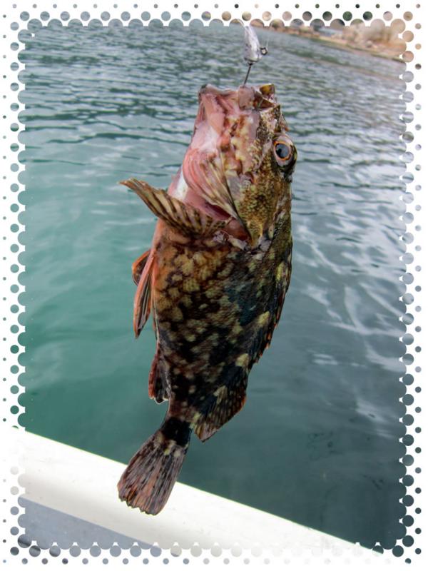 f:id:familyfishing:20170518230319j:plain