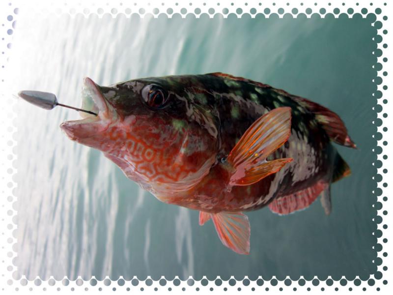 f:id:familyfishing:20170518230321j:plain