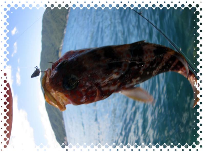 f:id:familyfishing:20170530203141j:plain