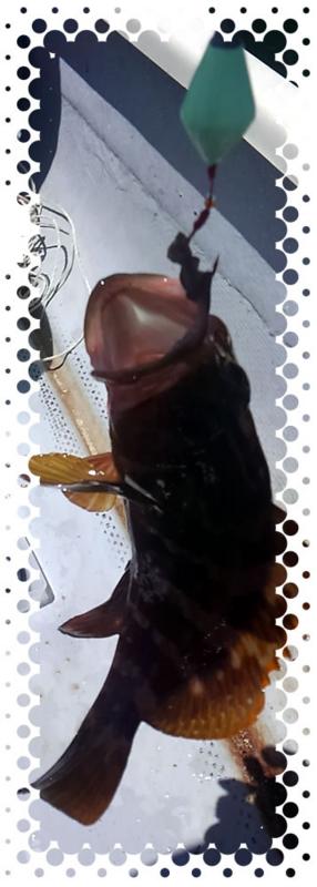 f:id:familyfishing:20170621064205j:plain