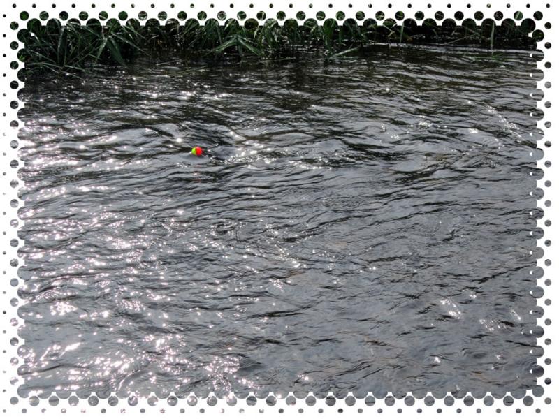 f:id:familyfishing:20170702191824j:plain