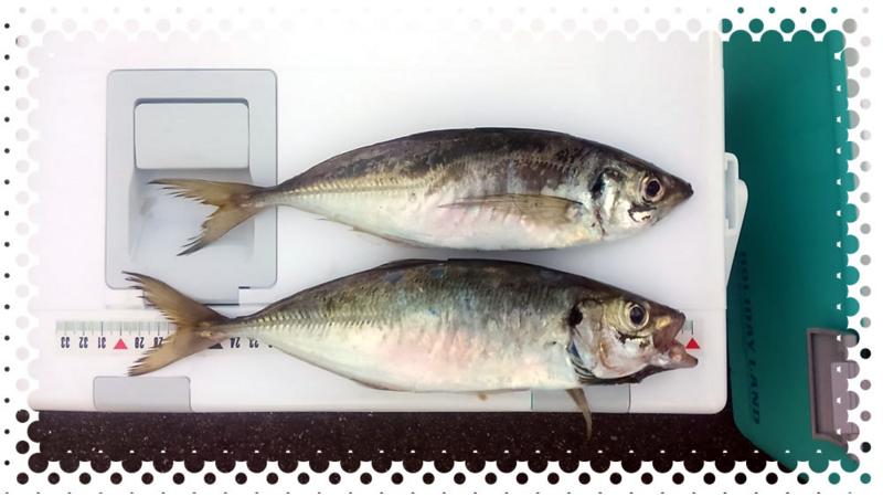 f:id:familyfishing:20170709212939j:plain