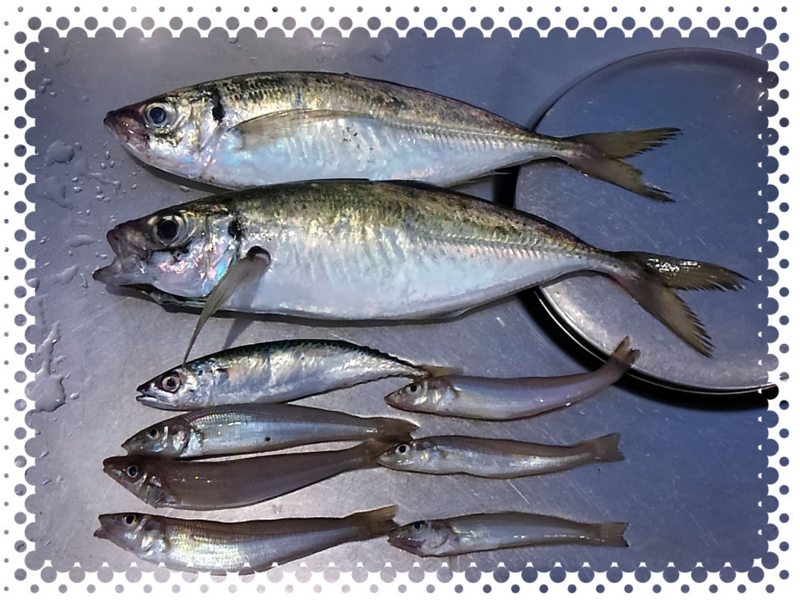 f:id:familyfishing:20170709212943j:plain