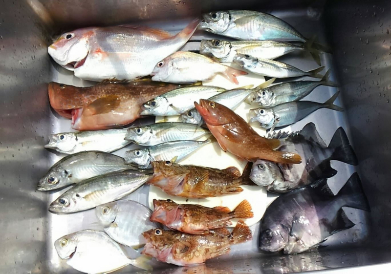 f:id:familyfishing:20170812224447j:plain