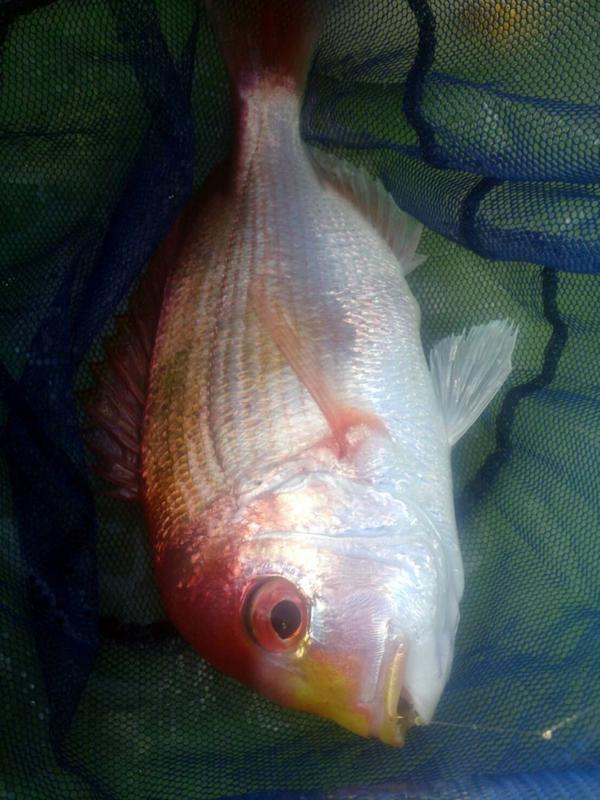 f:id:familyfishing:20170812224450j:plain