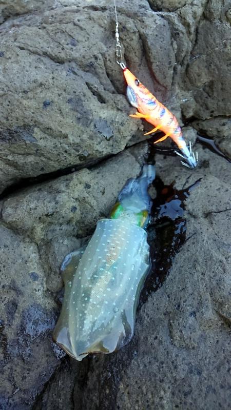 f:id:familyfishing:20170910221928j:plain