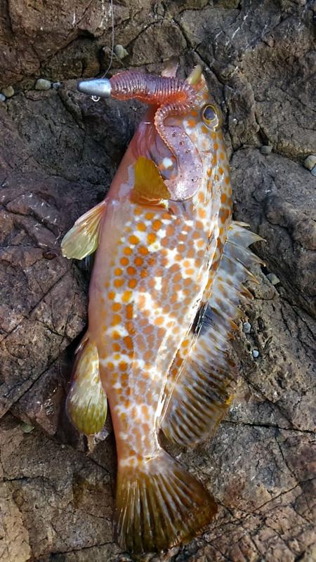 f:id:familyfishing:20170926183545j:plain