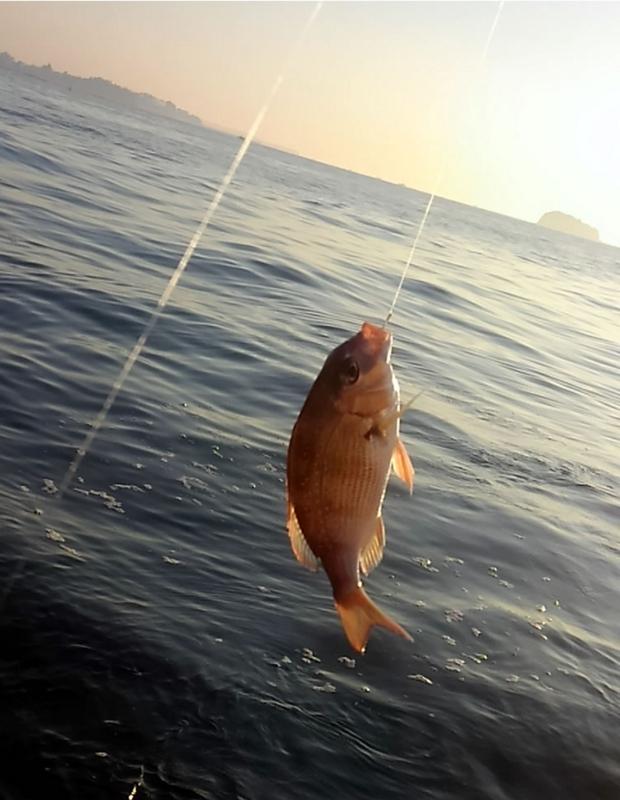f:id:familyfishing:20171013205611j:plain