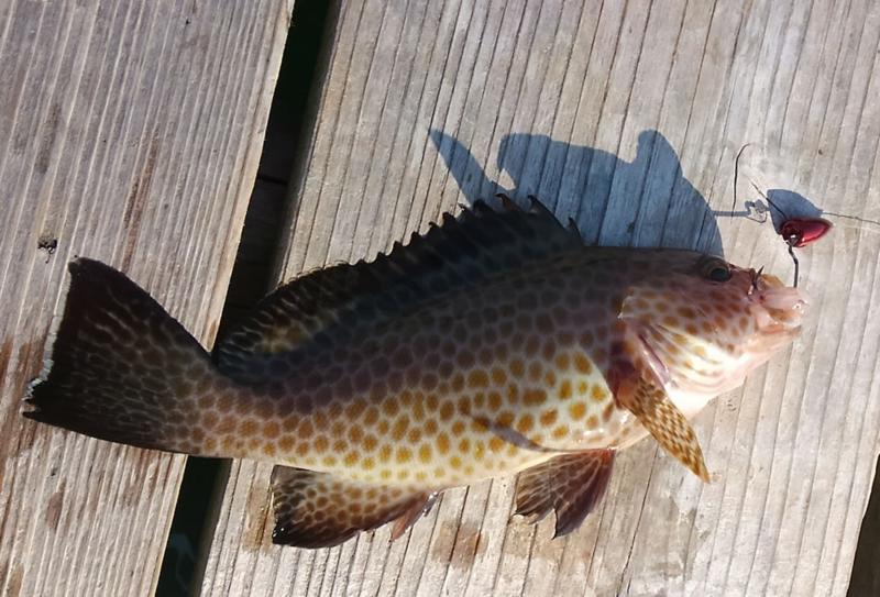 f:id:familyfishing:20171109000622j:plain