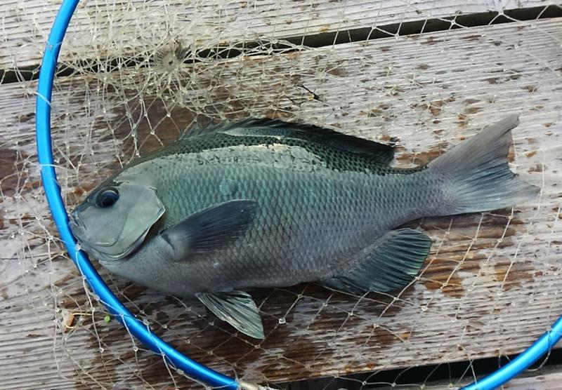 f:id:familyfishing:20171109000630j:plain