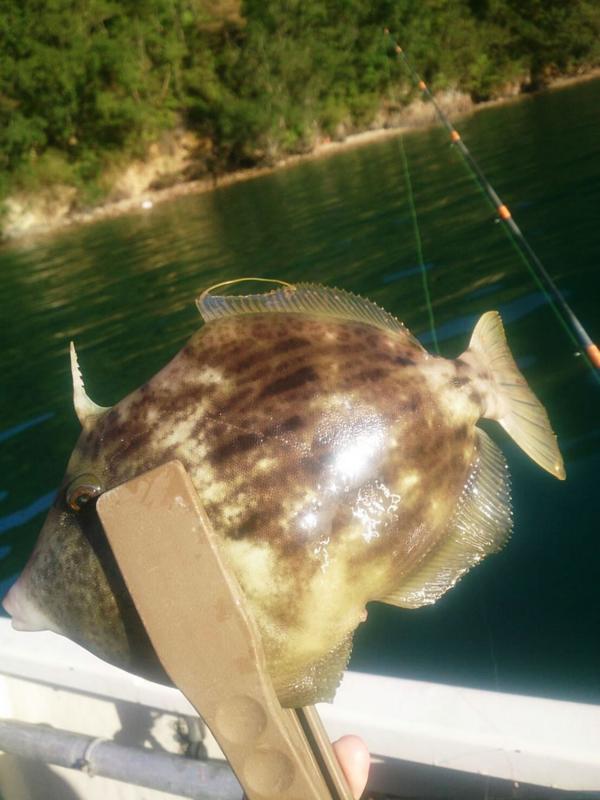f:id:familyfishing:20171113222032j:plain