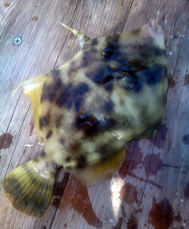 f:id:familyfishing:20171113222033j:plain