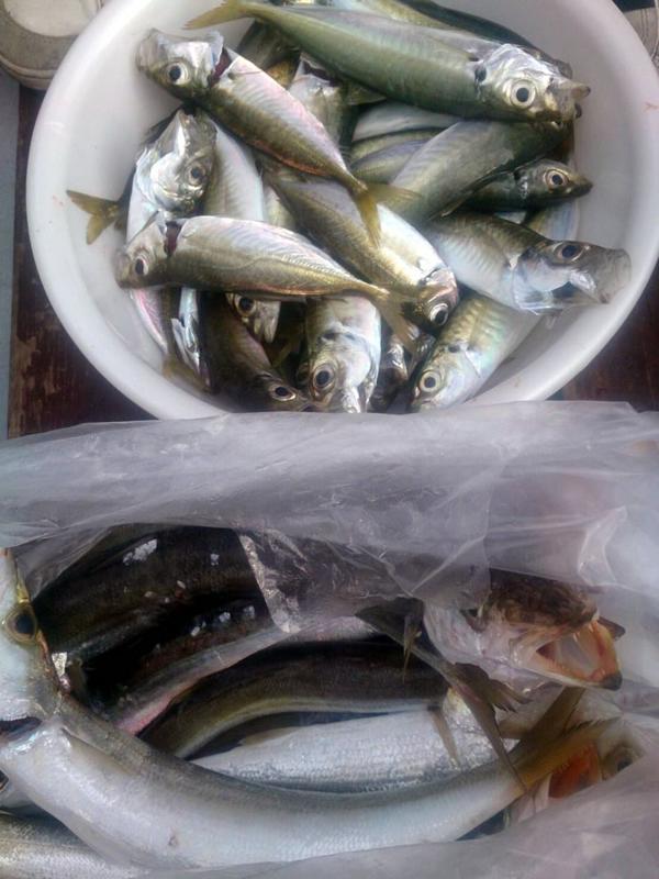 f:id:familyfishing:20171130215519j:plain