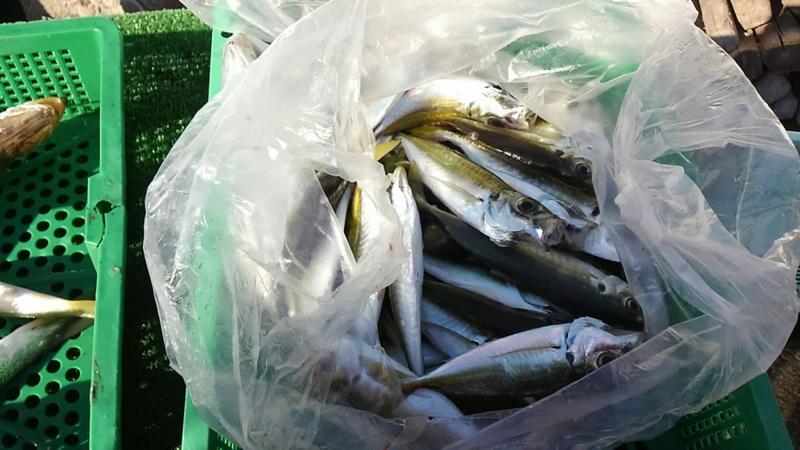 f:id:familyfishing:20171210103407j:plain