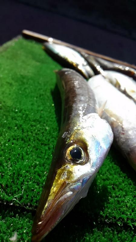 f:id:familyfishing:20171224203534j:plain