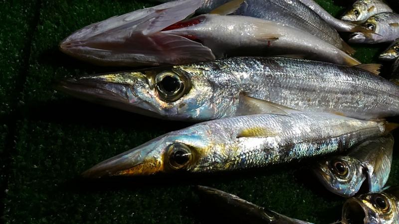 f:id:familyfishing:20171224203535j:plain