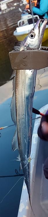 f:id:familyfishing:20180108170925j:plain