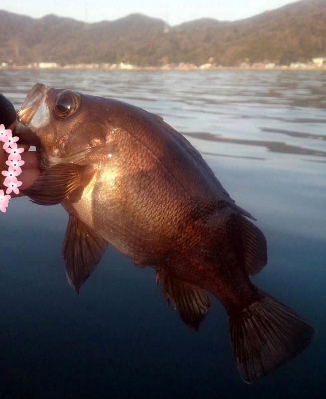 f:id:familyfishing:20180402202510j:plain