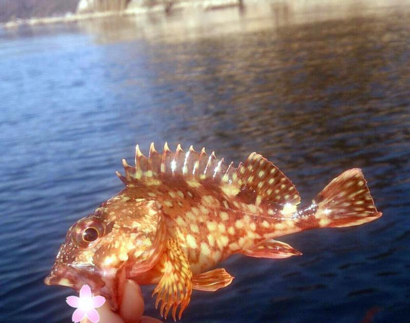 f:id:familyfishing:20180402202511j:plain