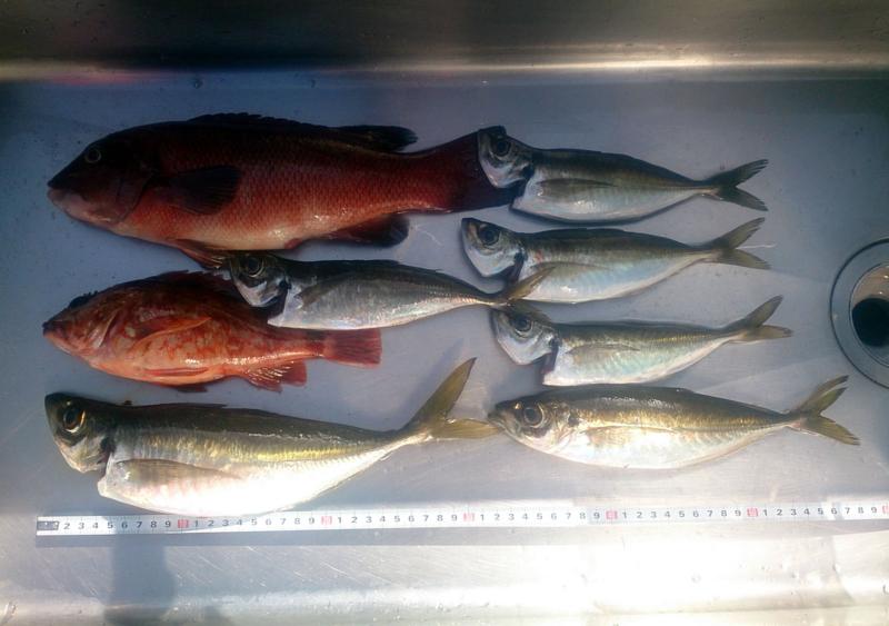 f:id:familyfishing:20180420193324j:plain