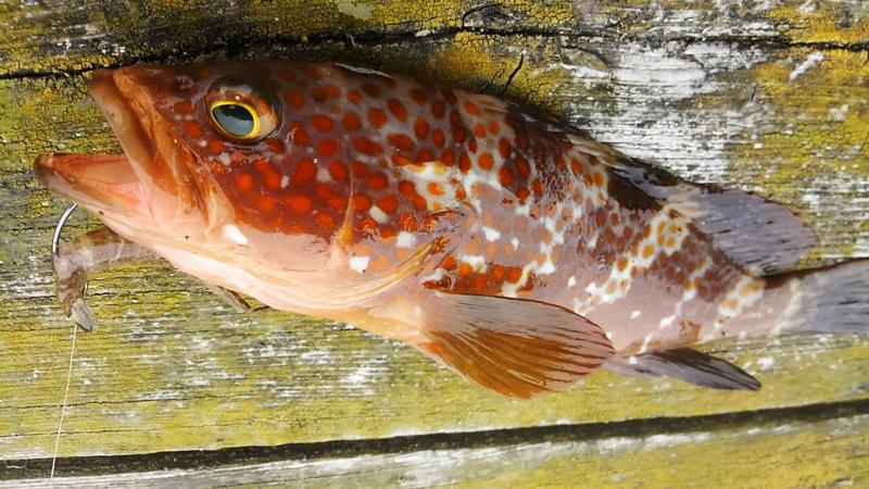 f:id:familyfishing:20180430214201j:plain