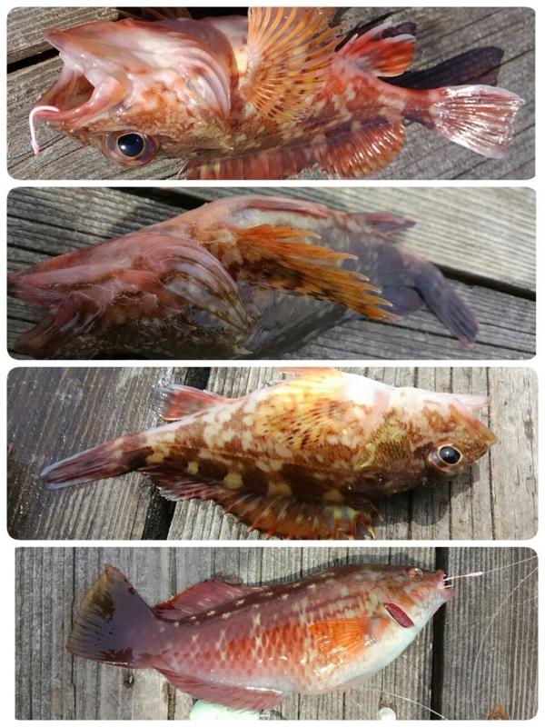 f:id:familyfishing:20180528183744j:plain