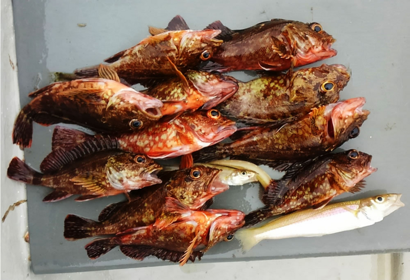 f:id:familyfishing:20180531234327j:plain