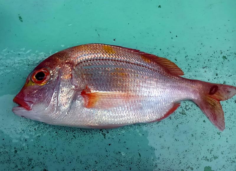f:id:familyfishing:20180610124922j:plain
