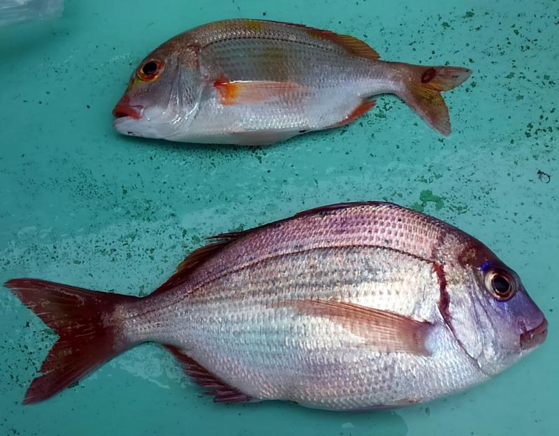 f:id:familyfishing:20180610124923j:plain