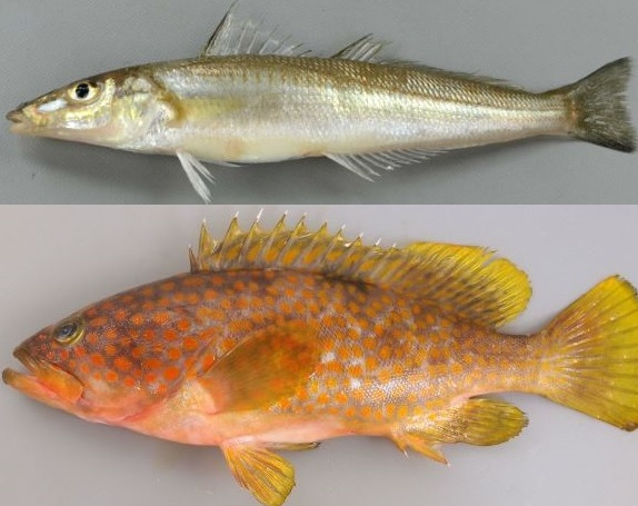 f:id:familyfishing:20180613102913j:plain