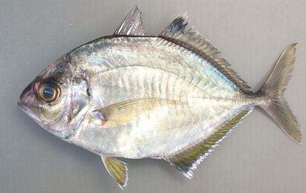 f:id:familyfishing:20180613102914j:plain