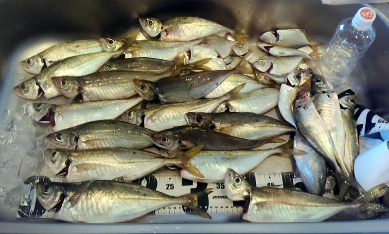 f:id:familyfishing:20180704071138j:plain