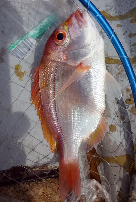 f:id:familyfishing:20180704071143j:plain