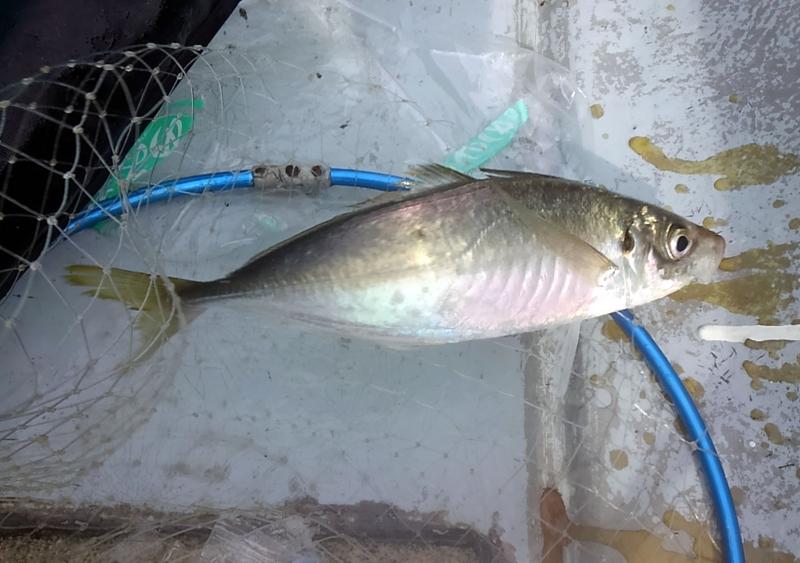 f:id:familyfishing:20180704071144j:plain