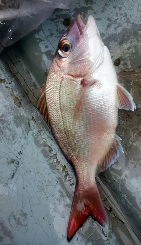f:id:familyfishing:20180704071148j:plain