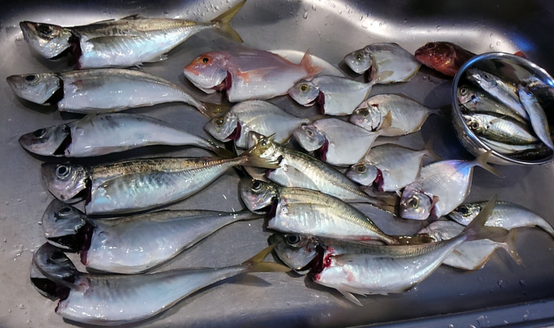 f:id:familyfishing:20180716092001j:plain